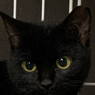 かわいい黒猫♪黒美ちゃん