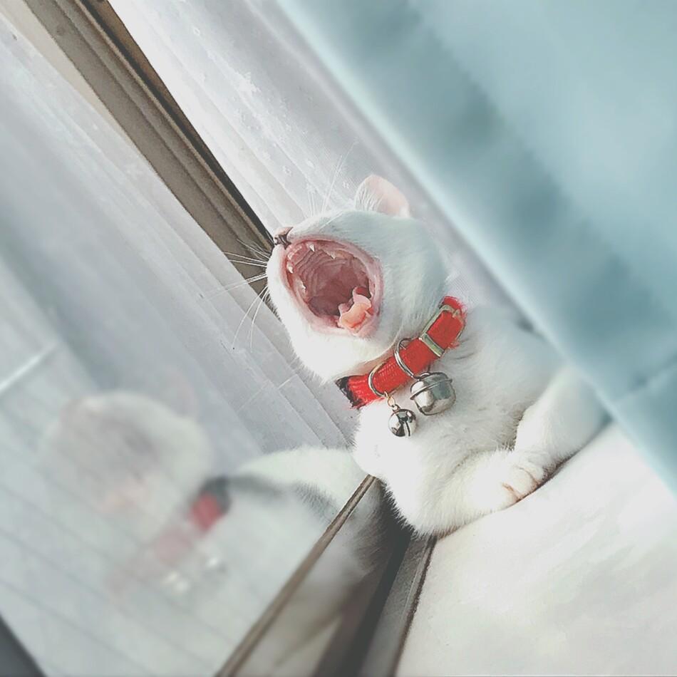 サランのカバー写真