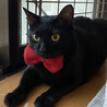 目がクリクリのお膝の上大好きな黒猫です