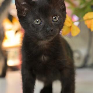 ジジみたいな黒猫の女の子