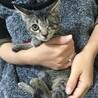 片目を失った子猫 ハンディ乗り越え 幸せになりたい