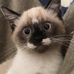 『Terra里親会猫部』 サムネイル3