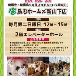 おーあみ避難所譲渡会in新山下