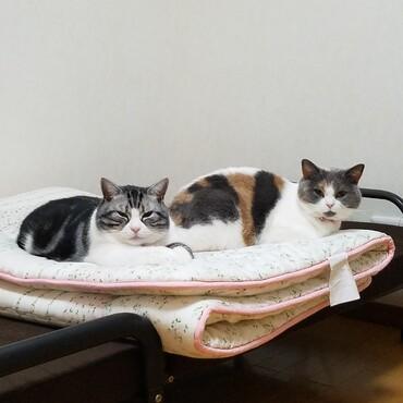 うちの猫たちです(〃´ω`〃)