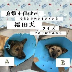 倉敷の、福田犬クイズ!