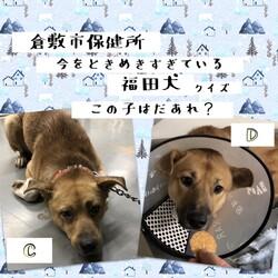 「倉敷の、福田犬クイズ!」サムネイル2