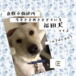 「倉敷の、福田犬クイズ!」サムネイル3