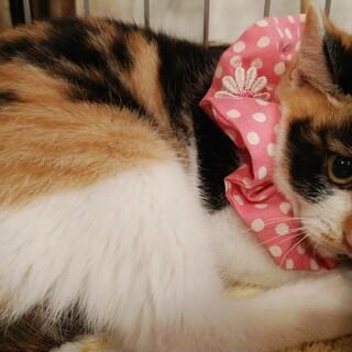 三毛猫のミディアム&黒白のラージ♂