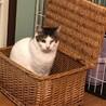 おしとやかに見えておてんば★ウィンク猫はんぺん サムネイル5