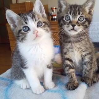 可愛い子猫2匹の里親様を募集します!