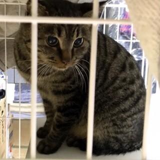 【急募】保護猫を幸せにしてください!