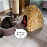 ドーム型の猫ベッド