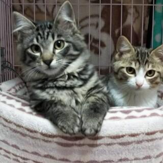 ◎可愛い子猫達のお家を見つけてあげたい!
