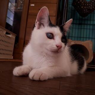 カラスに両目をやられてしまった子猫こつぶちゃん♀
