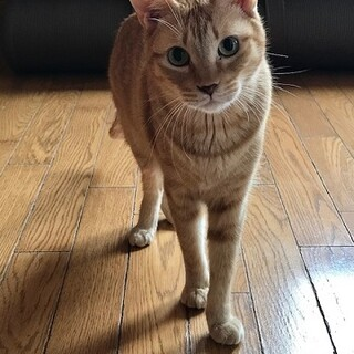 ビビリですが、猫にはとても優しいキットくんです。