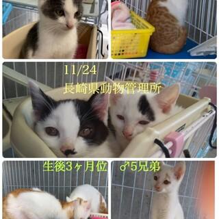 子猫の兄弟を助けてください!!
