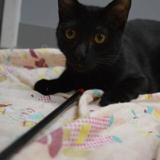 甘えん坊の黒猫、けんじくん