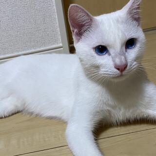 蒼い目がとても綺麗な子です♂