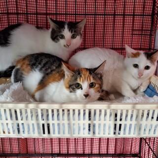 倉庫で産まれた3姉妹