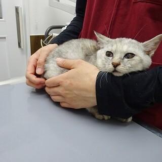 ギリギリの状態で保護された子猫