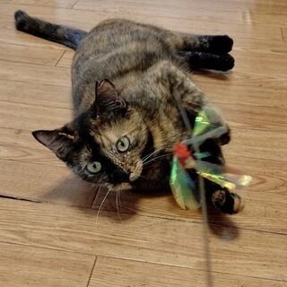 控えめな美しいサビ猫サン♡めいちゃん