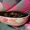 ちょっと困り顔のサビ猫☆ちゃびちゃん サムネイル7