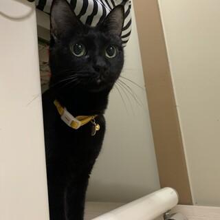 愛護センターから引き出し*障害あり黒猫
