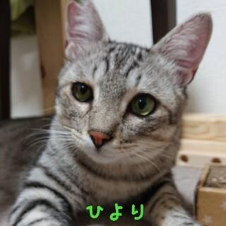12/12【猫のすゝめ】参加 ひよりくん