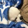 大好きなぞうさん毛布で寝てます♡