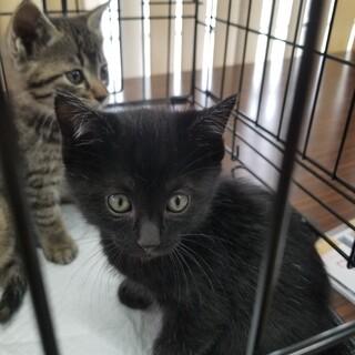 可愛い〰キジトラと黒猫の兄弟