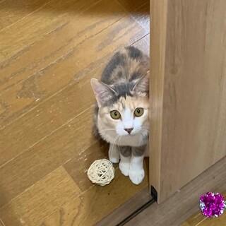 『モイス』デレデレのお膝大好き猫