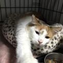 満員のシェルター猫を家族に迎えてください!
