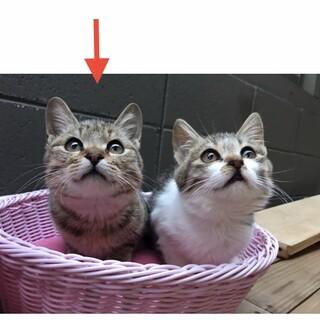 丸顔童顔のかわいい子猫(=^x^=)