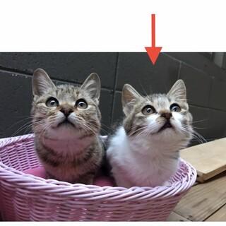 少し寄り目がかわいい子猫(=^x^=)