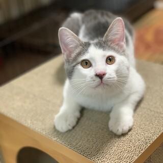 おせんべいくん*猫カフェ入店予定につき募集停止