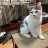おせんべいくん*猫カフェ入店予定につき募集停止 サムネイル6