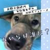 倉敷の福田犬ブラザーズ、再び?!