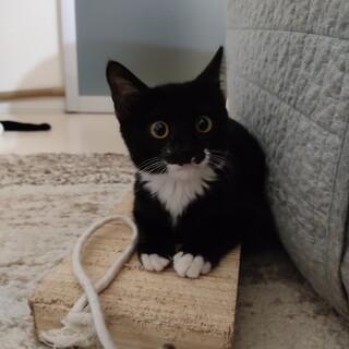 人慣れ訓練1週間で家猫に(^o^)適応力抜群❣