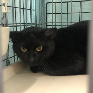 超SOS❗️幸せを待っている綺麗な黒猫男子