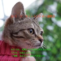 *子猫と大人猫*キャットソシオン譲渡会