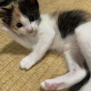 活発な三毛猫の女の子!!