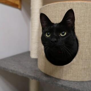 人懐っこくてお転婆な黒猫女子