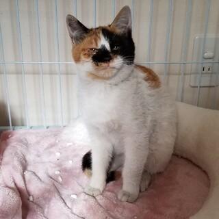 コロコロの三毛猫ちゃん❣️