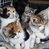 5匹の兄妹 三毛猫 キジトラ 黒猫