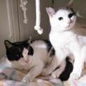 人懐こい兄妹猫 スーとズー