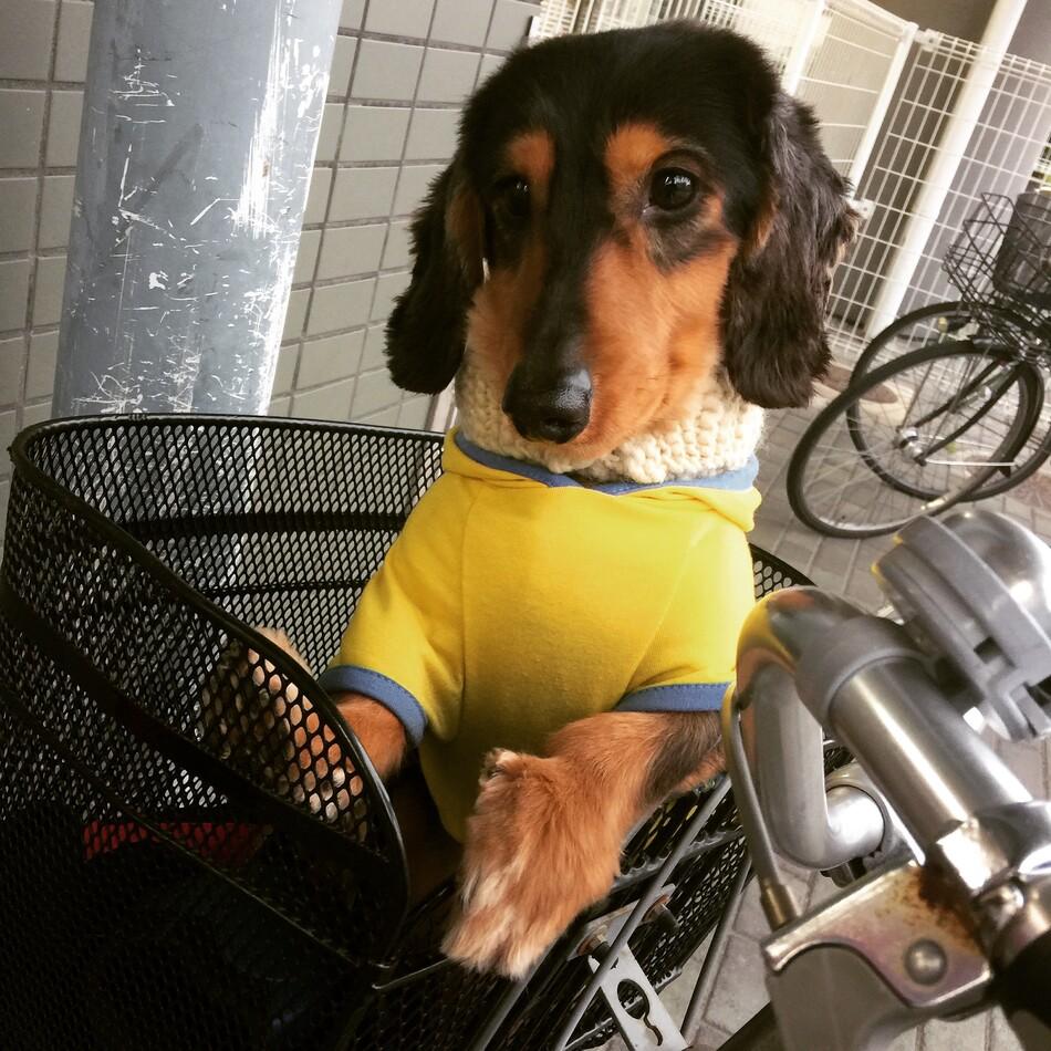 将犬(まさひろ)のカバー写真