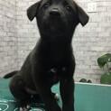生後2か月の女の子ミックス犬