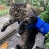 もふもふのキジ猫ちゃん
