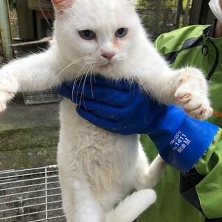 青い目の白猫ちゃん