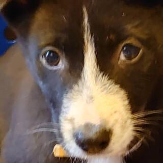 コンテナの下で生まれた兄弟犬です
